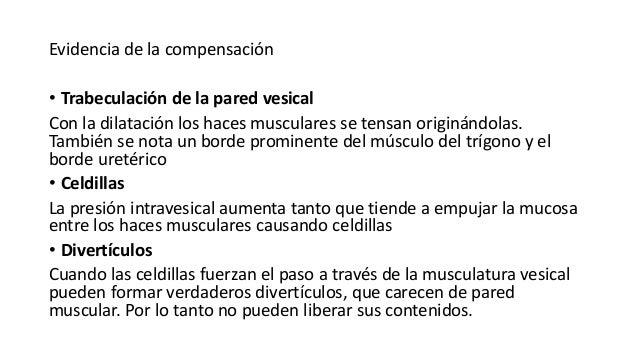 Evidencia de la compensación • Trabeculación de la pared vesical Con la dilatación los haces musculares se tensan originán...