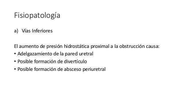 Fisiopatología a) Vías Inferiores El aumento de presión hidrostática proximal a la obstrucción causa: • Adelgazamiento de ...