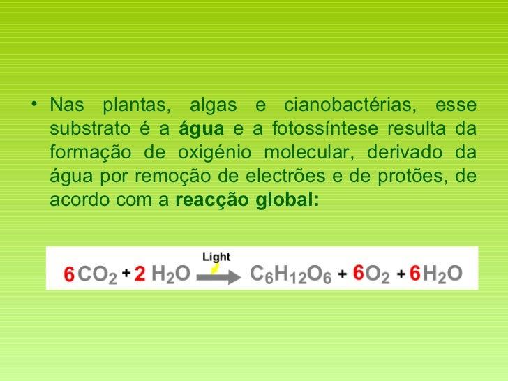<ul><li>Nas plantas, algas e cianobactérias, esse substrato é a  água  e a fotossíntese resulta da formação de oxigénio mo...