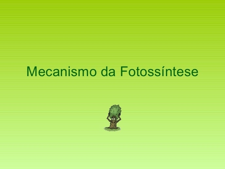 Mecanismo da Fotossíntese