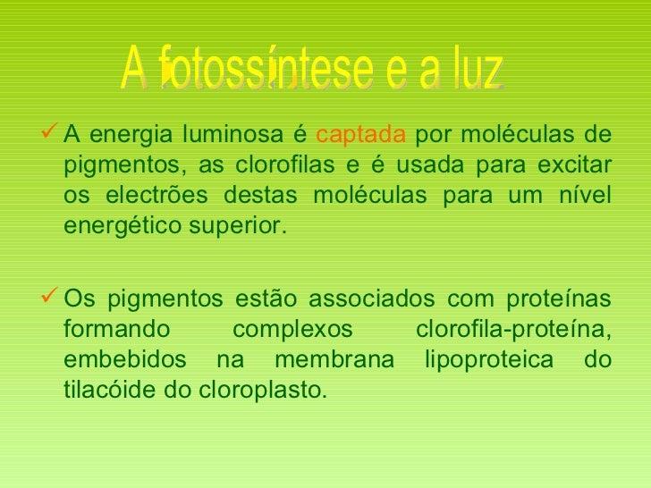 <ul><li>A energia luminosa é  captada  por moléculas de pigmentos, as clorofilas e é usada para excitar os electrões desta...
