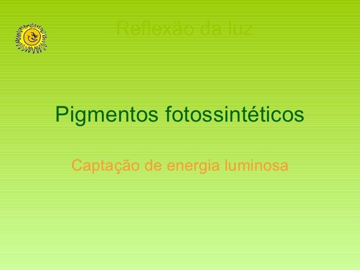 Pigmentos fotossintéticos Captação de energia luminosa Reflexão da luz