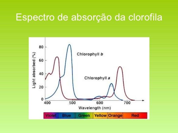 Espectro de absorção da clorofila