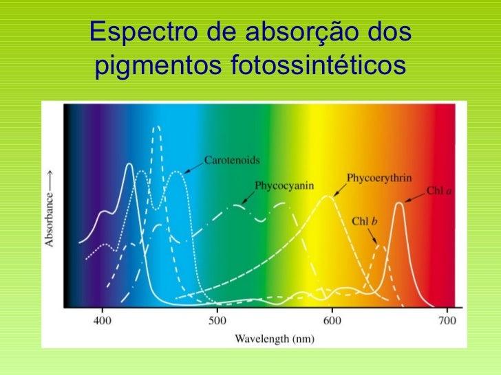 Espectro de absorção dos pigmentos fotossintéticos