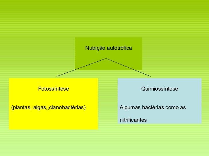 Nutrição autotrófica Fotossíntese (plantas, algas,,cianobactérias) Quimiossíntese Algumas bactérias como as nitrificantes