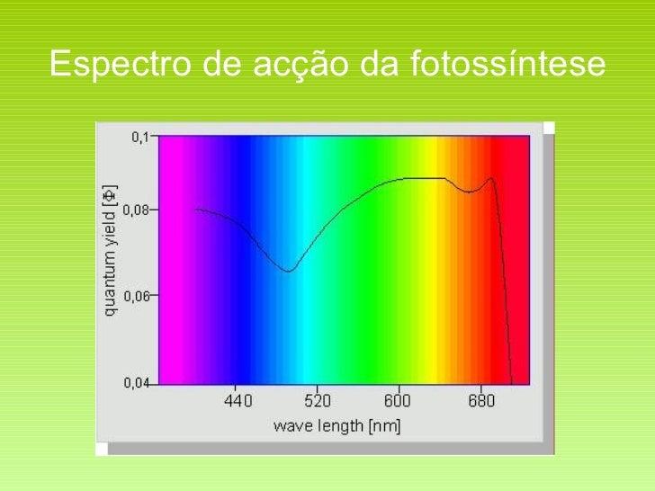 Espectro de acção da fotossíntese