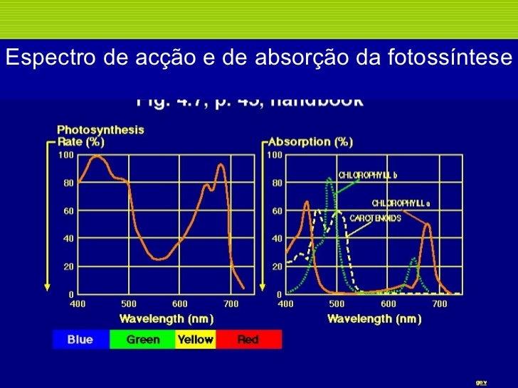 Espectro de acção e de absorção da fotossíntese