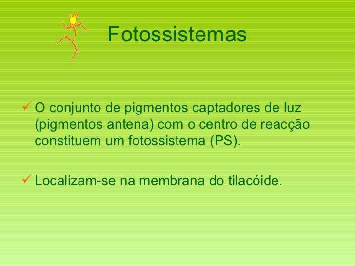 Fotossistemas <ul><li>O conjunto de pigmentos captadores de luz (pigmentos antena) com o centro de reacção constituem um f...