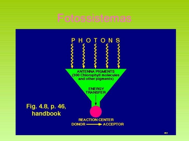 Fotossistemas