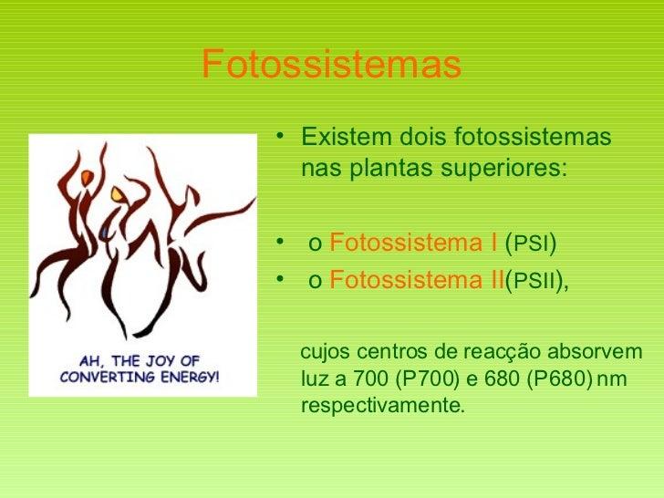 Fotossistemas <ul><li>Existem dois fotossistemas nas plantas superiores: </li></ul><ul><li>o  Fotossistema I  ( PSI )  </l...