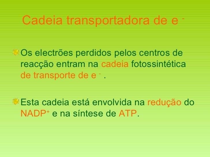 Cadeia transportadora de e  -   <ul><li>Os electrões perdidos pelos centros de reacção entram na  cadeia  fotossintética  ...