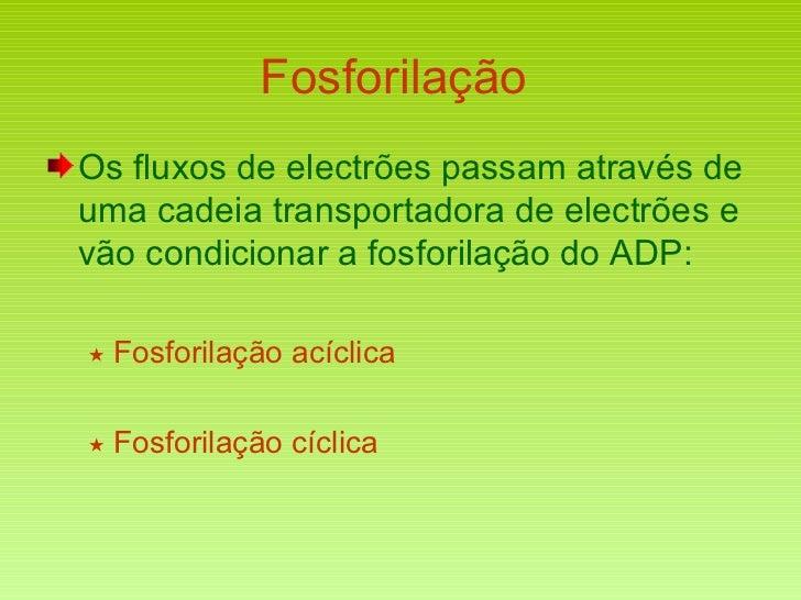 Fosforilação  <ul><li>Os fluxos de electrões passam através de uma cadeia transportadora de electrões e vão condicionar a ...