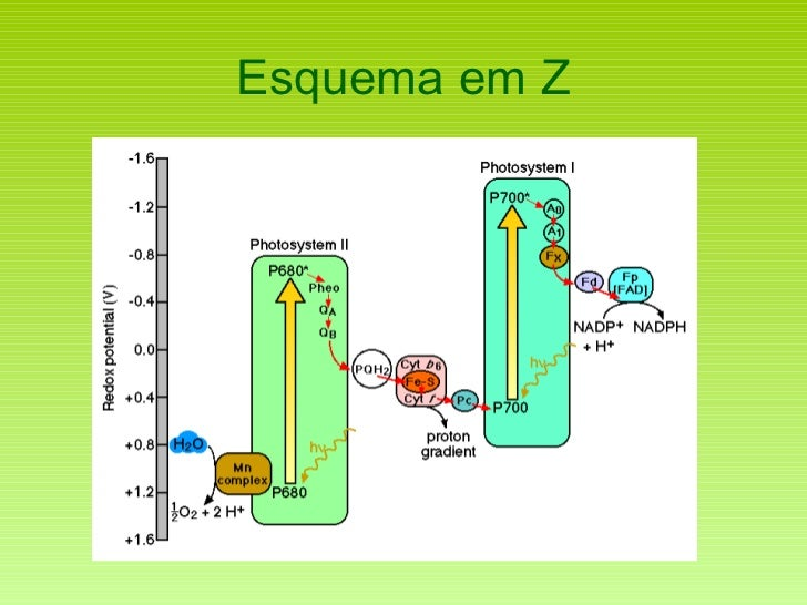 Esquema em Z