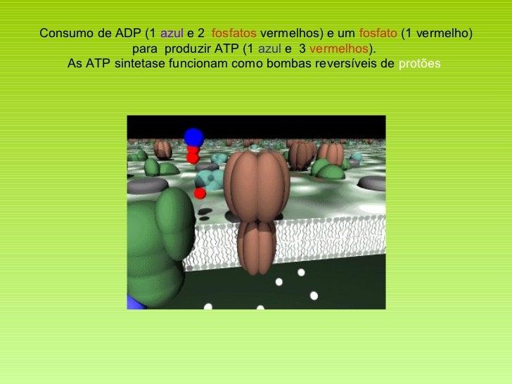 Consumo de ADP (1  azul  e 2  fosfatos  vermelhos ) e um  fosfato  (1 vermelho) para  produzir ATP (1  azul  e  3  vermelh...
