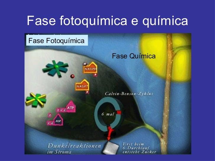 Fase fotoquímica e química Fase Fotoquímica Fase Química