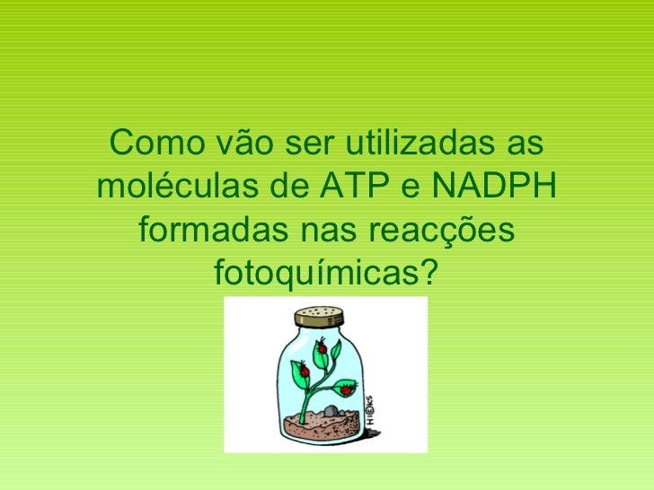 Como vão ser utilizadas as moléculas de ATP e NADPH formadas nas reacções fotoquímicas?