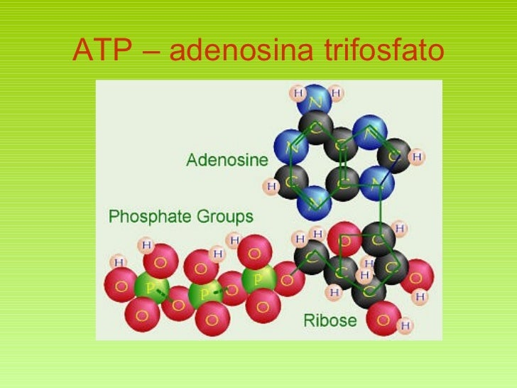 ATP – adenosina trifosfato
