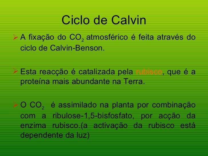 Ciclo de Calvin <ul><li>A fixação do CO 2  atmosférico é feita através do ciclo de Calvin-Benson. </li></ul><ul><li>Esta r...