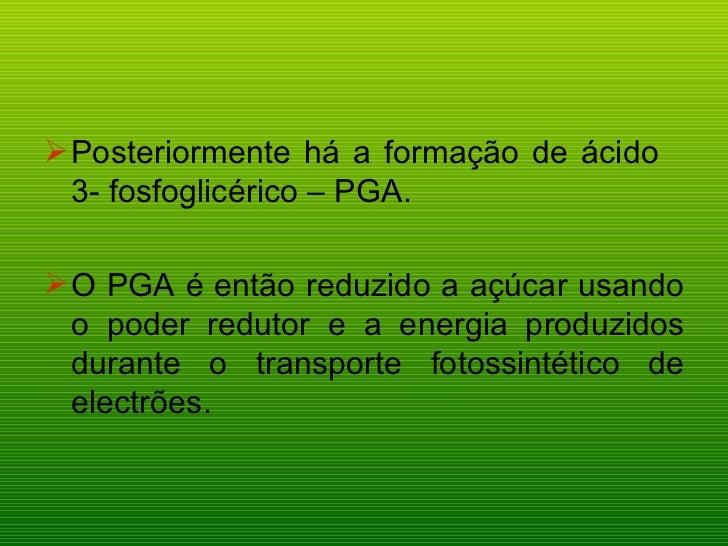 <ul><li>Posteriormente há a formação de ácido  3- fosfoglicérico – PGA. </li></ul><ul><li>O PGA é então reduzido a açúcar ...