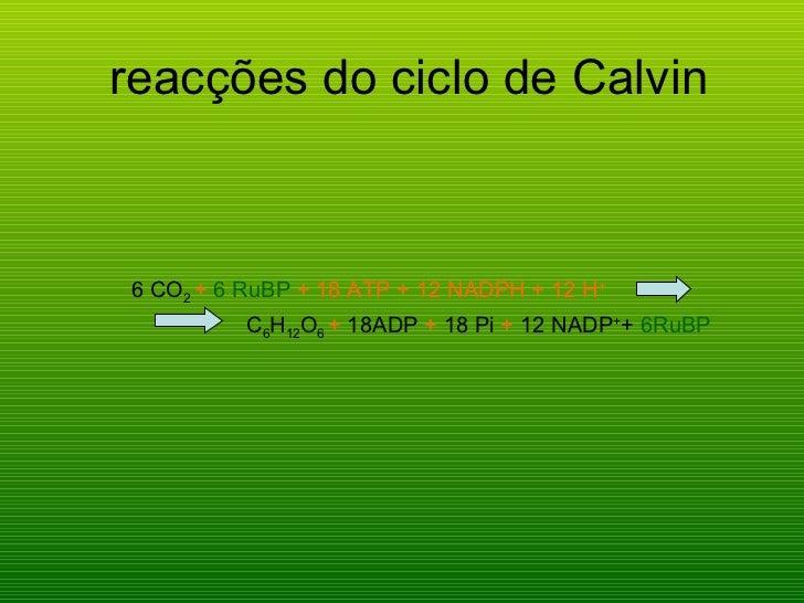 reacções do ciclo de Calvin <ul><li>6 CO 2   +  6 RuBP  + 18 ATP + 12 NADPH + 12 H + </li></ul><ul><li>C 6 H 12 O 6   +  1...