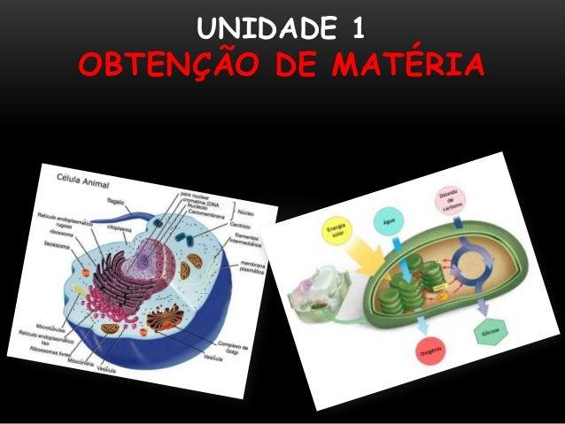 UNIDADE 1OBTENÇÃO DE MATÉRIA