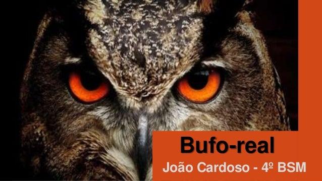 Bufo-real João Cardoso - 4º BSM