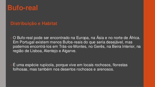 O bufo real - João Cardoso 4BSM Slide 3
