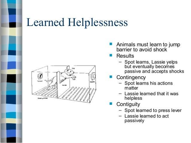Learned Helplessness - YouTube