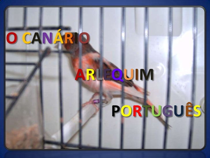 OCANÁRIO<br />ARLEQUIM<br />PORTUGUÊS<br />