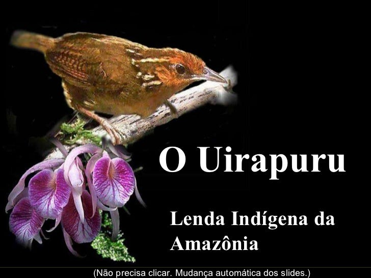 O Uirapuru Lenda Indígena da Amazônia (Não precisa clicar. Mudança automática dos slides.)