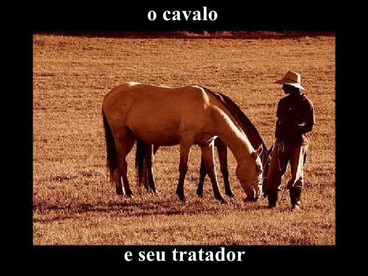 o cavalo   e seu tratador