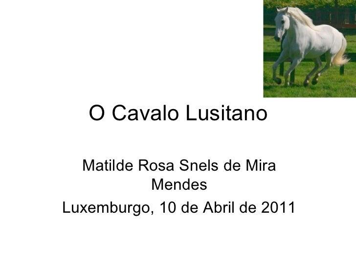 O Cavalo Lusitano Matilde Rosa Snels de Mira Mendes Luxemburgo, 10 de Abril de 2011