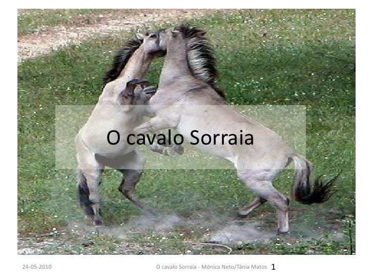 O cavalo Sorraia<br />12-12-2009<br />1<br />O cavalo Sorraia - Mónica Neto/Tânia Matos<br />