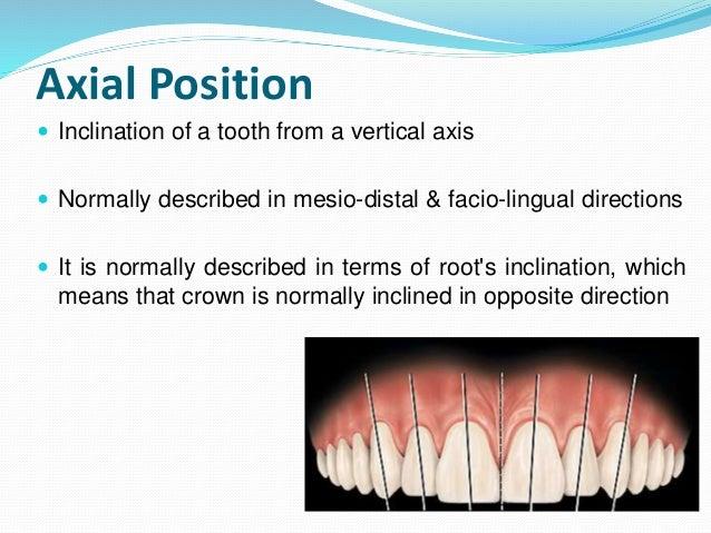 Development Of Occlusion