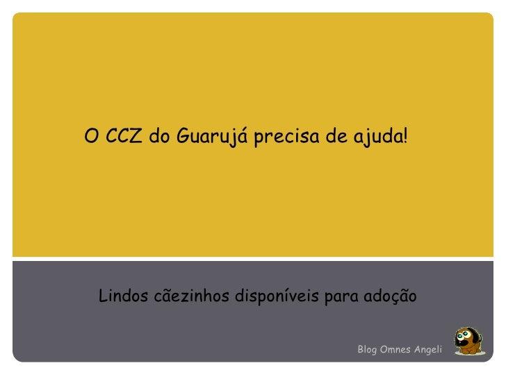 O CCZ do Guarujá precisa de ajuda! Lindos cãezinhos disponíveis para adoção Blog Omnes Angeli