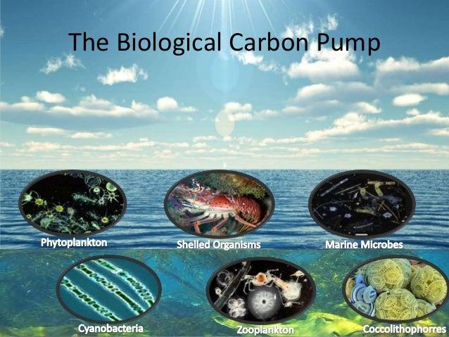 The Biological Carbon Pump
