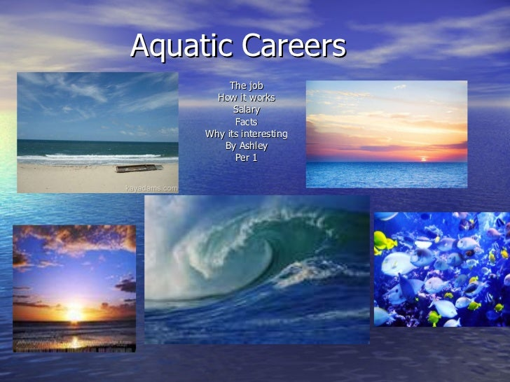 Aquatic Careers The job How it works Salary Facts Why its interesting By Ashley Per 1