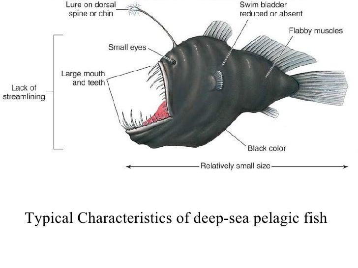 Ocean depths habitat for Characteristics of fish