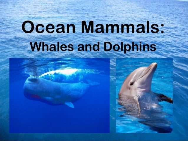 Ocean Mammals:Whales and Dolphins