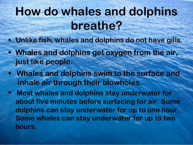 Ocean dolphins and whales powerpoint for How do fish breathe underwater