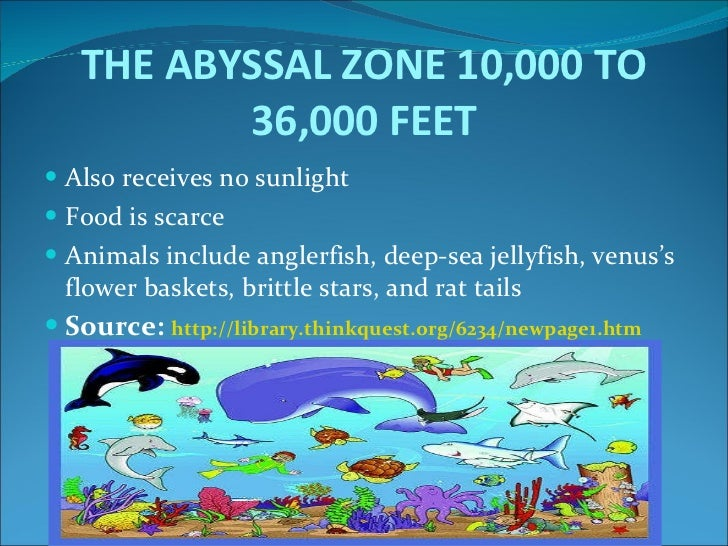 Ocean habita powerpoint the abyssal sciox Image collections