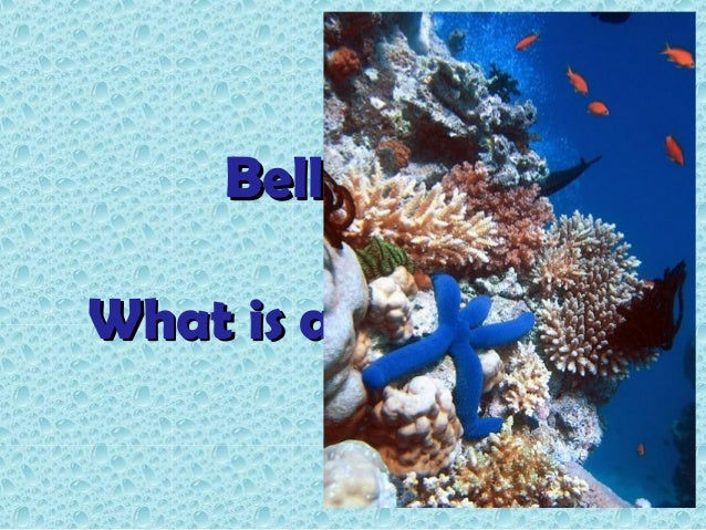 BellringerWhat is a coral reef?