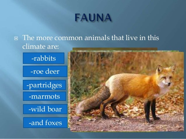  The more common animals that live in this climate are: -and foxes -partridges -rabbits -wild boar -marmots -roe deer