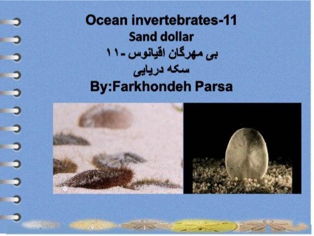 Ocean invertebrates -11