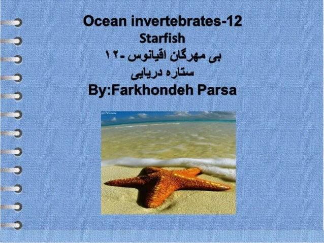 Ocean invertebrates -12