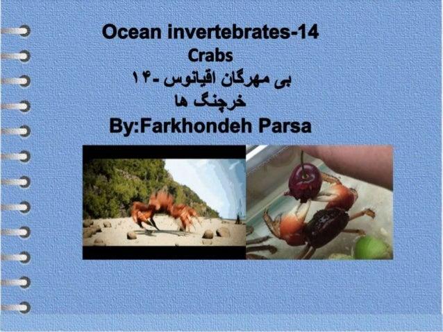 Ocean invertebrates- 14