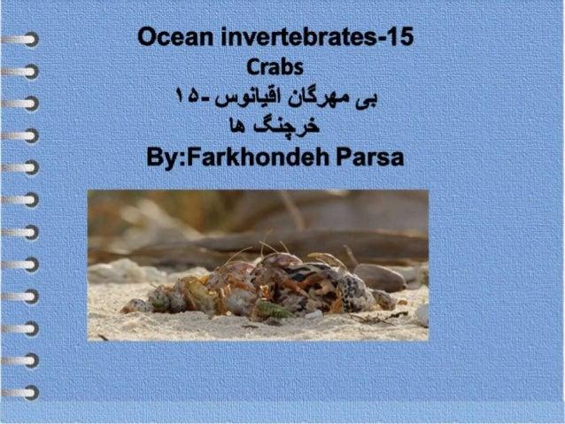 Ocean invertebrates- 15