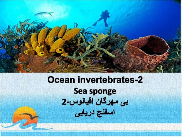 Ocean invertebrates-  2