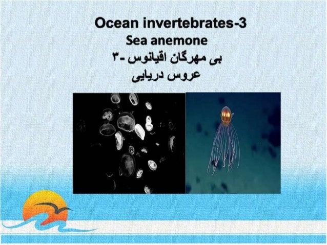 Ocean invertebrates- 3