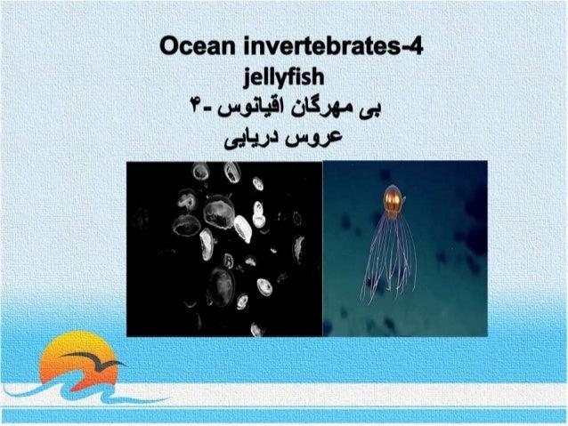 Ocean invertebrates- 4